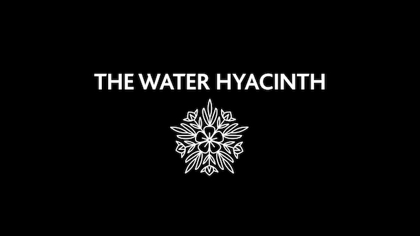 Power of Compounding Story - The Water Hyacinth